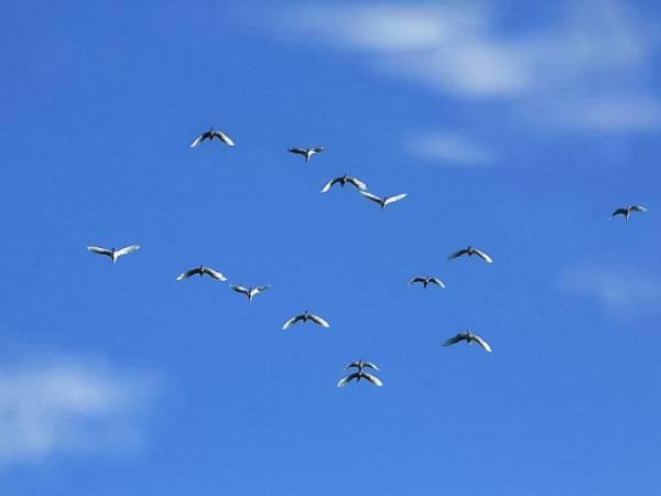 Nằm mơ thấy chim trời chơi xổ số con gì may mắn